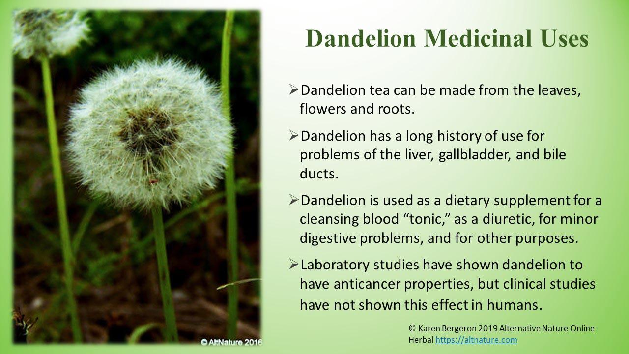 Dandelion, Herbal Uses , Edible Uses