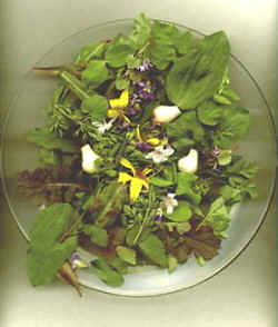 wild greens and flowers in salad
